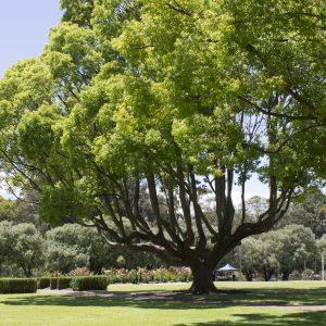 Pet-friendly parks | Collie River Valley