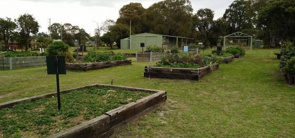 Community Garden Open Day @ Collie Community Garden | Collie | Western Australia | Australia