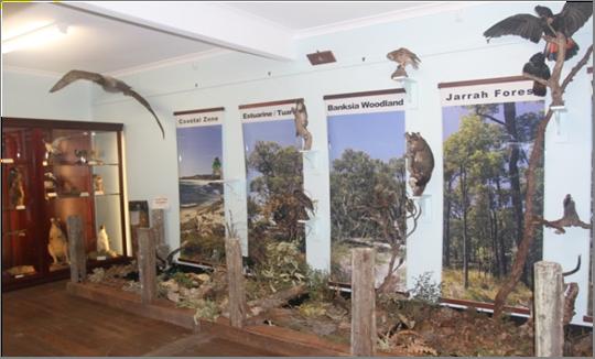 Wildlife Display @ Wellington Discovery Forest   Western Australia   Australia