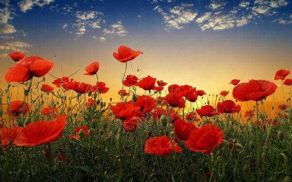 Collie Anzac Day Services @ Soldiers Park | Collie | Western Australia | Australia